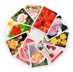 Cartões postais Rosas - Coleção II